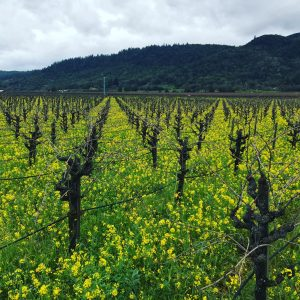 Spring Time in the Wine Country